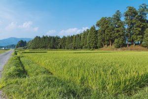 農地転用に必要な条件・手続きをわかりやすく解説!
