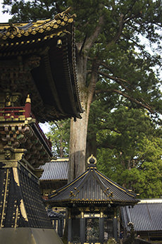 「栃木県」の不動産を査定・高値売却のコツは?│おすすめ不動産会社ランキング